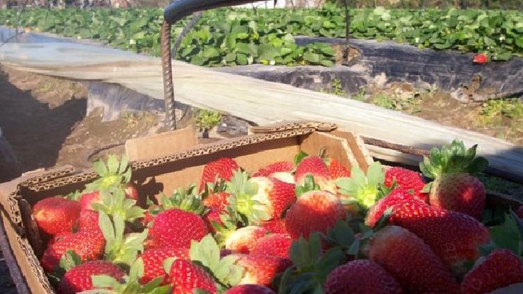 Agrana Fruit pretende despedir 60 empleados en Coronda