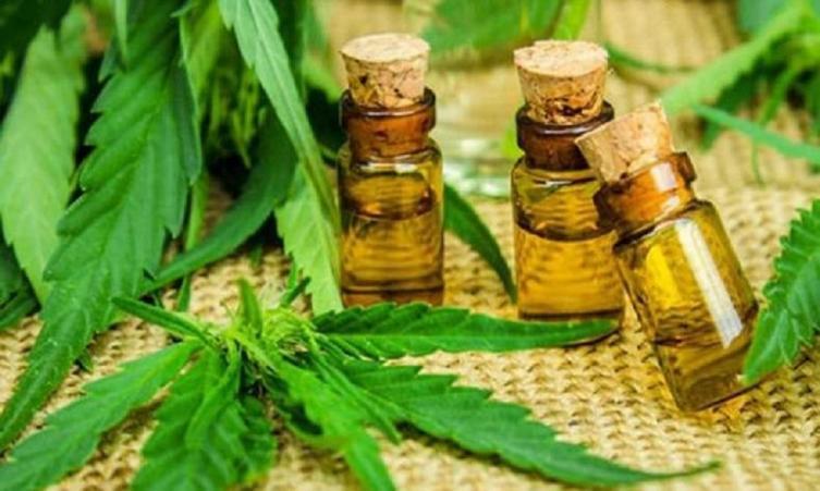 autocultivo de cannabis - Imagen ilustrativa